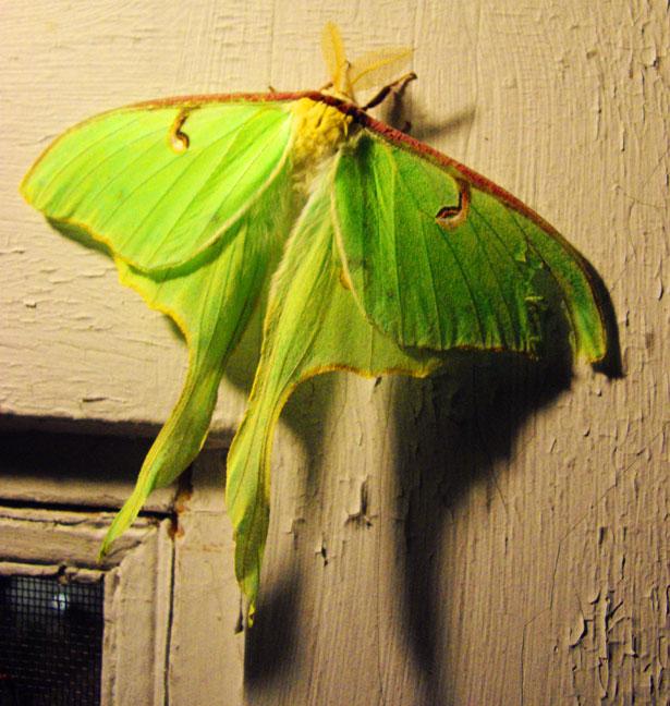MothFarm2(sm).jpg