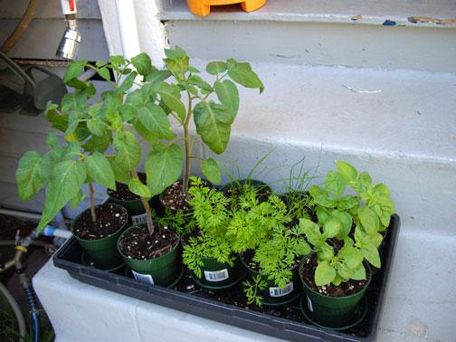 PlantsSeedlings(bl).jpg