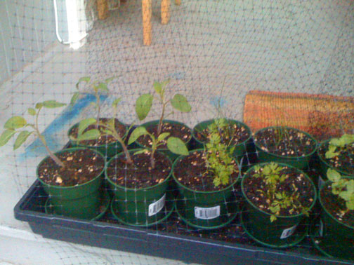 PlantsSeedlingsSmall(bl).jpg