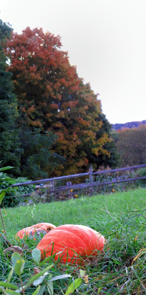 PumpkinPanUp2010(bl).jpg