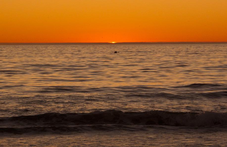 SunsetDolphinDec(bl).jpg