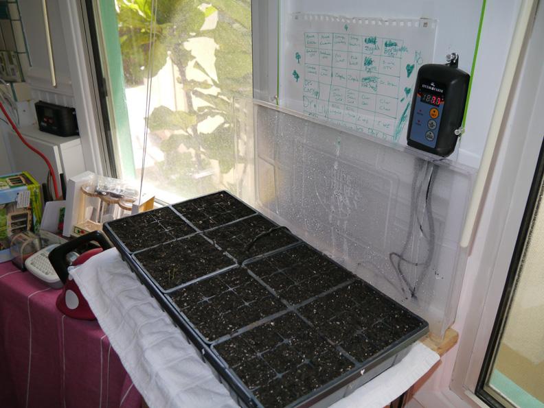 TomatoSeedlingsThermo(bl).jpg