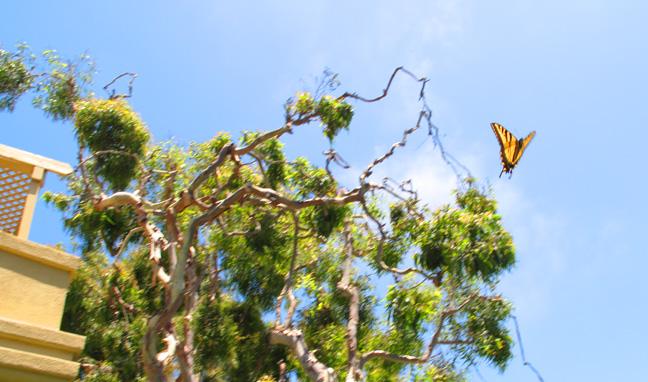 VenButterfly(bl).jpg