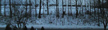 WinterCows(bl).jpg