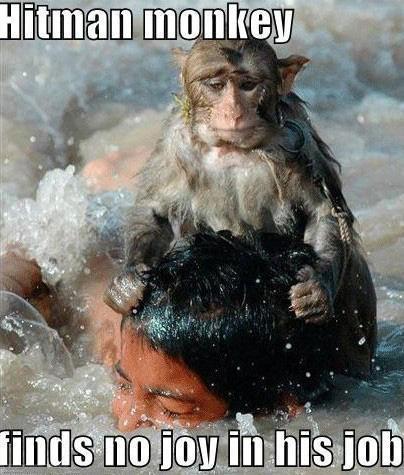 monkeyLOLZ.jpg